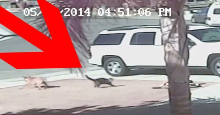 Beherzt eingegriffen: Katze rettet Kind vor Killer-Hund - Video - Video