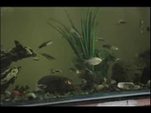 Organ and muscle resonances Aquarium by Generate