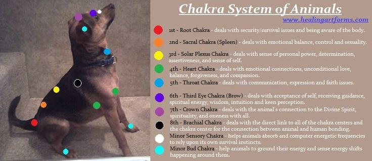 CHAKRA SYSTEMS ON CANINE'S Here is a wonderful depiction of the major and some minor chakras on your loving canine. More postings will be up for the minor chakras as well as other animals! Have any questions about healing, affirmation or prayer work, feel free to contact us support@healingartforms.com