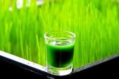 Using wheat grass to reverse gray hair: Traditional Chinese Medicine (TCM) links hair pigmentation to the quality of your blood and the strength of your kidneys. According to TCM, gray doesn't mean old as much as it points to weak kidneys and blood. Made up of 70% chlorophyll, wheatgrass, from the wheat plant triticum aestivum, restores the health of your kidneys and blood. See: Health Magic Through Chlorophyll From Living Plant Life by Dr. Bernard Jenson