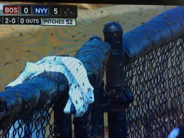 Yankees Vs Red Sox Game Was Delayed Today Due To A Swarm Of Bees