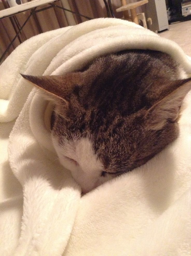 I had  such a big day today, so so  tired, hope I can sleep in.