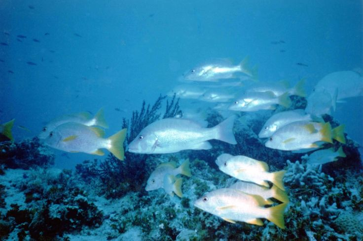 Aquatic Agony: Fish Killed for Food Animals Used for Food Issues PETA Asia