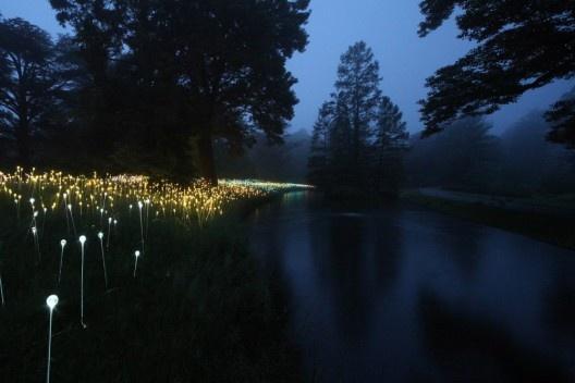 Puntos LED iluminan los Jardines de Longwood / Bruce Munro   Plataforma Arquitectura