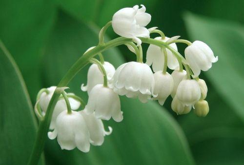 Ecco tutti i fiori da piantare in aprile: le bulbose estive, le piante da pieno sole come i gladioli, i fiori che crescono anche all'ombra come le begonie e le piante che fioriscono bene anche in vaso come le petunie. Scegliete il fiore giusto per voi e per il vostro giardino o terrazzo!