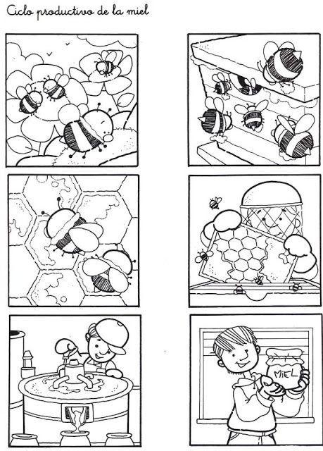 Ciclo de las abejas y la miel
