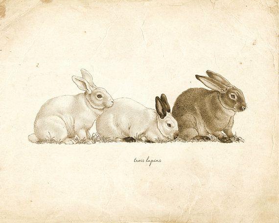 Vintage Rabbits on French Ephemera Print 8×10 P114
