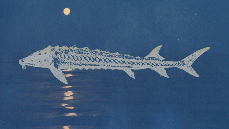 The Full Sturgeon Moon returns to the night sky, and to Slooh's telescopes, on August 17th.
