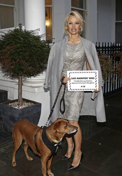 Pamela Anderson Photos Photos - Pamela Anderson accompanied by rescued dog Zorro deliver a 178,000-name petition to the High Commission of Mauritius, urging the country to implement a spay-and-neuter programme to tackle its stray-dog problem at High Commission Of Mauritius on December 12, 2016 in London, England. - Pamela Anderson Delivers a Petition to the High Commission of Mauritius in London