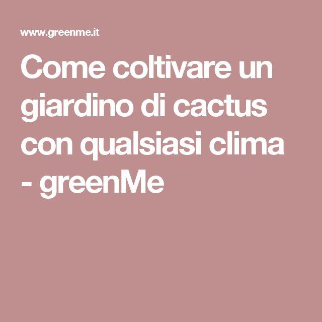 Come coltivare un giardino di cactus con qualsiasi clima - greenMe