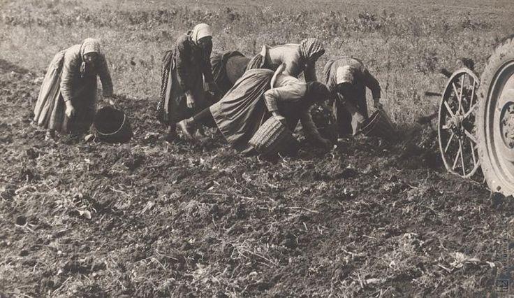 Martin Martinček: Zbieranie zemiakov I.:1960 - 1980