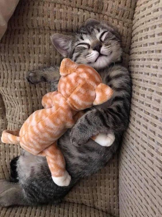 Momma And Her First Litter Litter Cute Cat Kittens