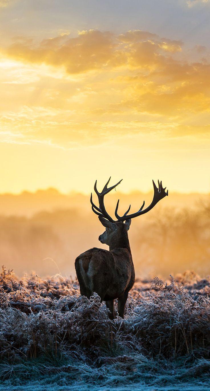 schöne hintergrundbilder tiere