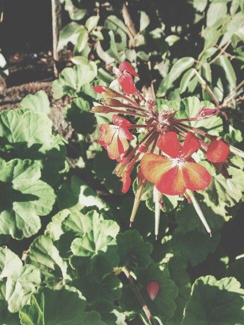 Flores //Flowers