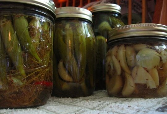 pickles! how fun! pickles were my favorite food as a kid... my grandparents gave me a giant jar of dill pickles for my birthday one year. pretty much the best b day present ever.