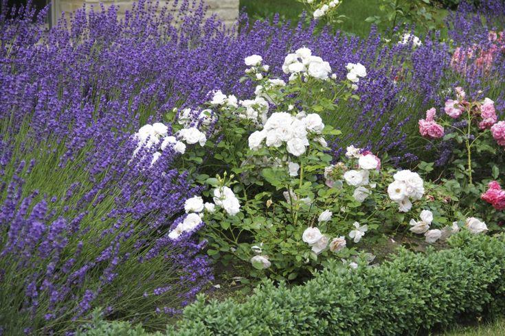 Цветник, построенный на контрасте расцветки и форм цветков и соцветий