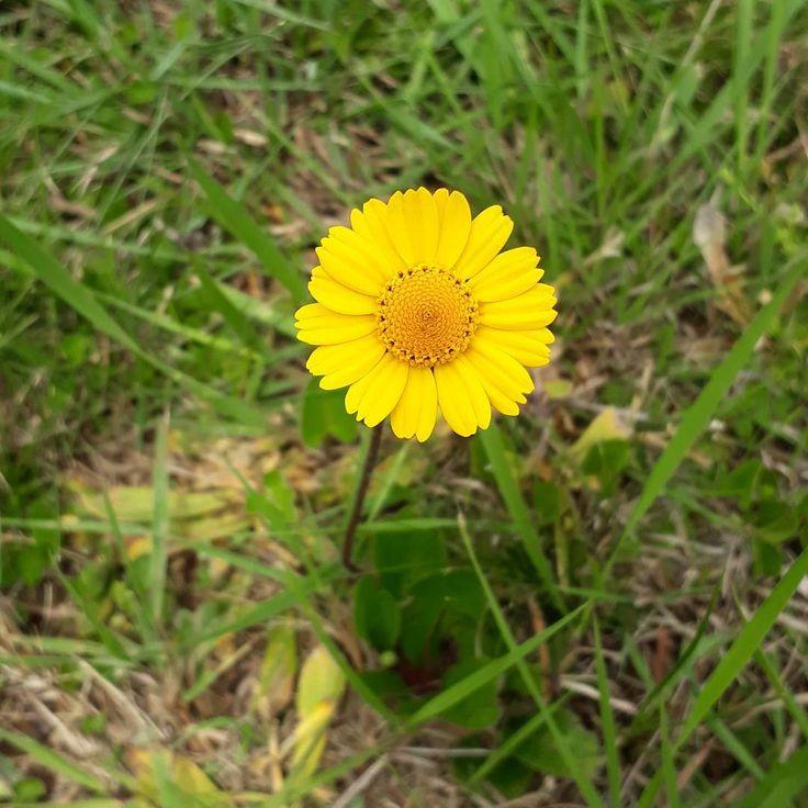 """31 curtidas, 1 comentários - Um Pontinho (@umpontinhobordados) no Instagram: """"Beleza em todo canto!!! É primavera e até o mato fica bonito! ❤🌱❤🌱❤ #umpontinho #mato #rural…"""""""