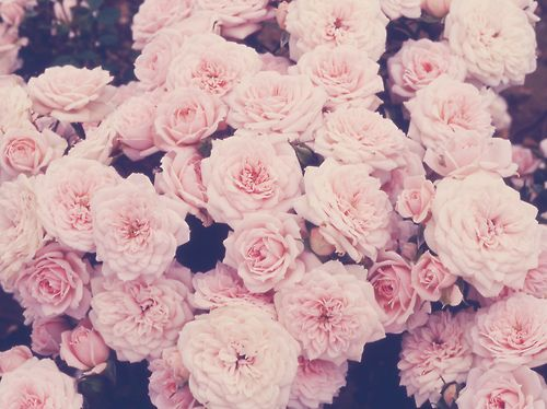 1000+ images about Wallpaper on Pinterest | Flower backgrounds ...