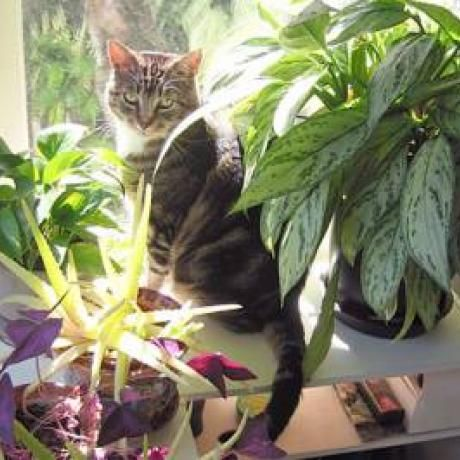 Plants And Foods That Are Poisonous To Cats