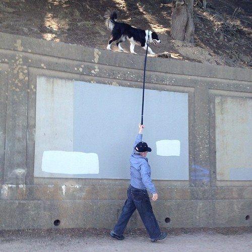 Portare a spasso il cane in modo alternativo