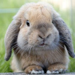 14 myths and truths about rabbits as pets...I have to wait till I have more time for a bunny rabbit...named Lola :)
