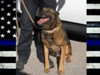 Houston police k9 jake