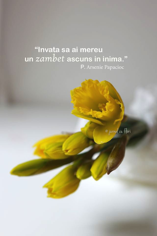 #narcise citat #zambet #inima