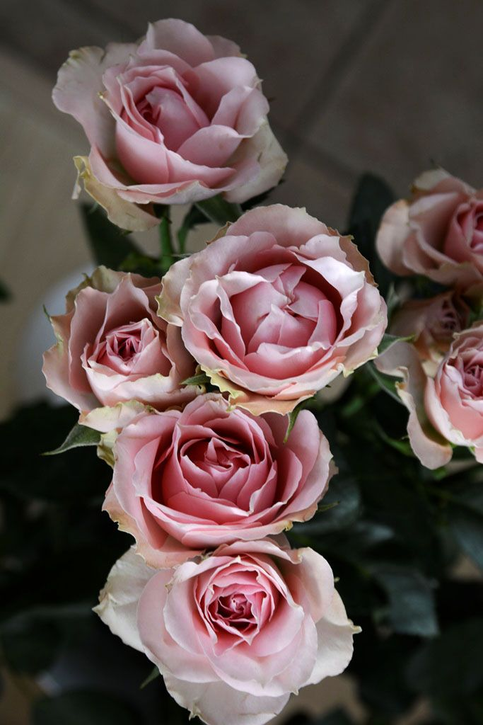 rose ramificate, dalla nostra fioreria, per augurarvi una felice domenica a tutti