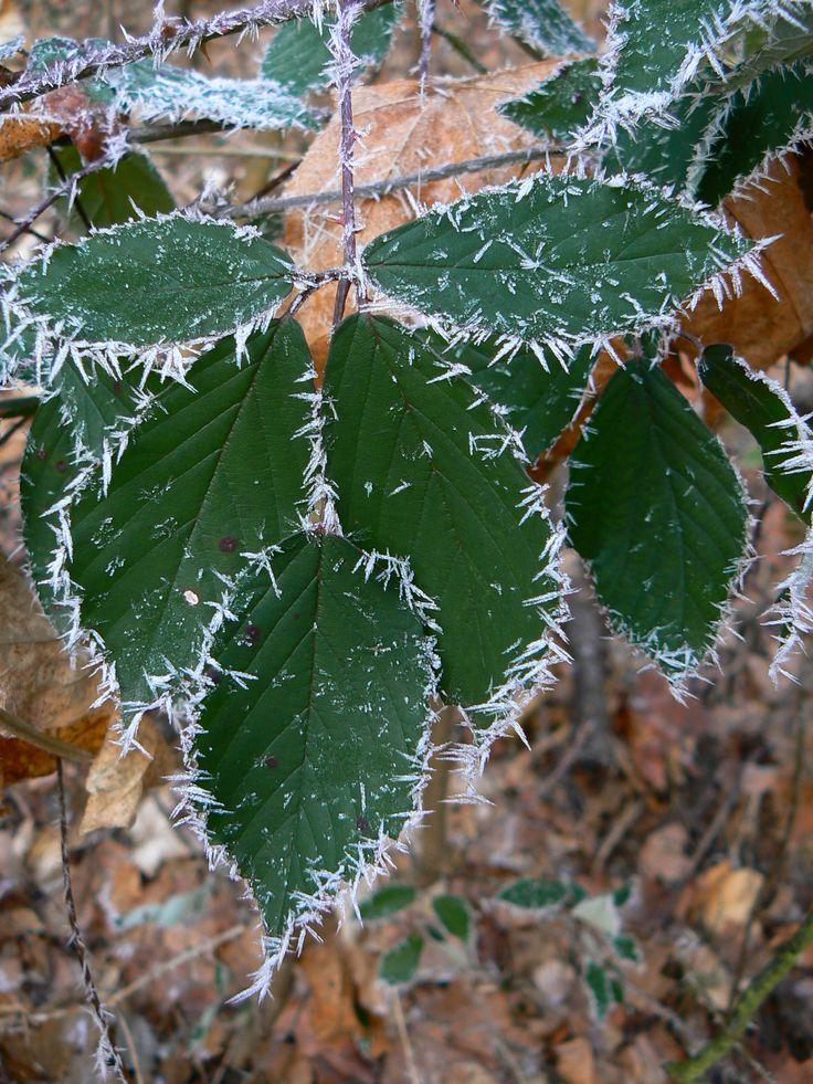 mrázik....frost