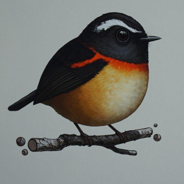 Fat Bird - 2016 Mike Mitchell Collared Bush Robin poster/print