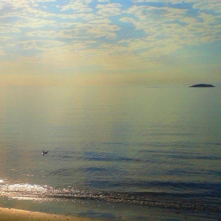 la mar dorada VIII