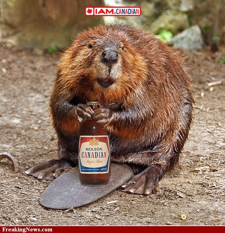 beaver with a stubby - can't get more Canadian than that