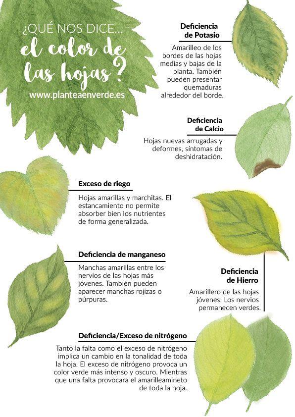 ¿Qué nos dice el color de las hojas? #huerto, #jardin