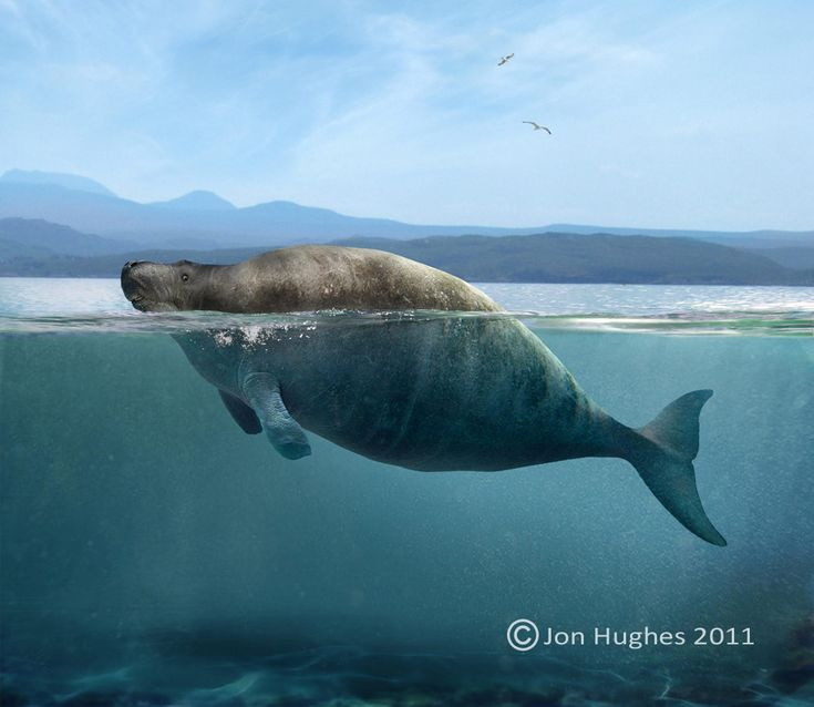 Jonathan Hughes - Depiction of the Steller's Sea Cow
