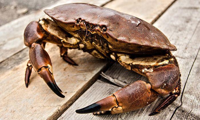 Yorkshire Crab Brand - Crab Photography ©