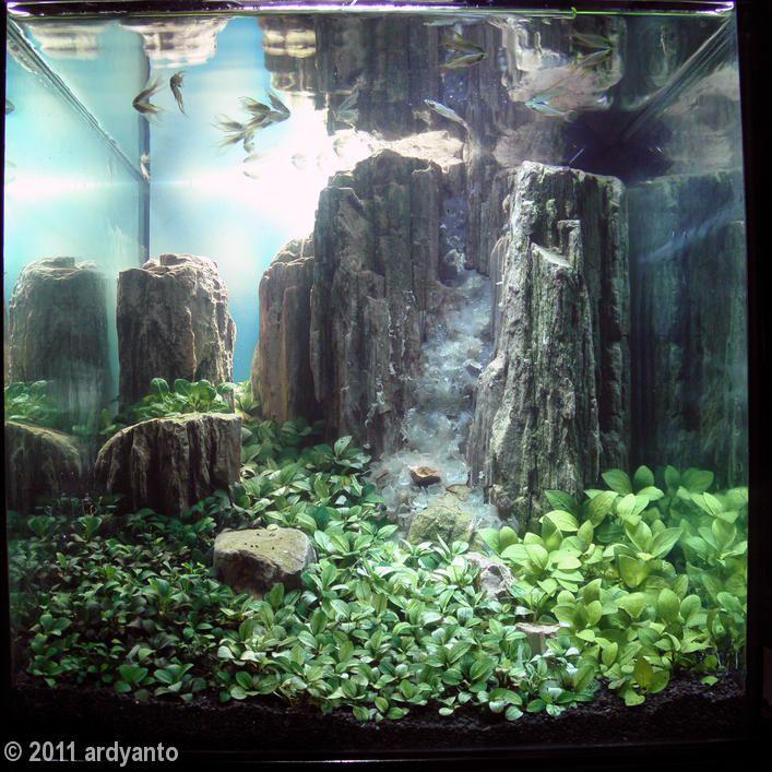 2011 AGA Aquascaping Contest Entry 216 Aqua