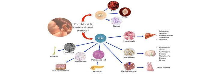 Best Features Of Cord Blood Stem Cells