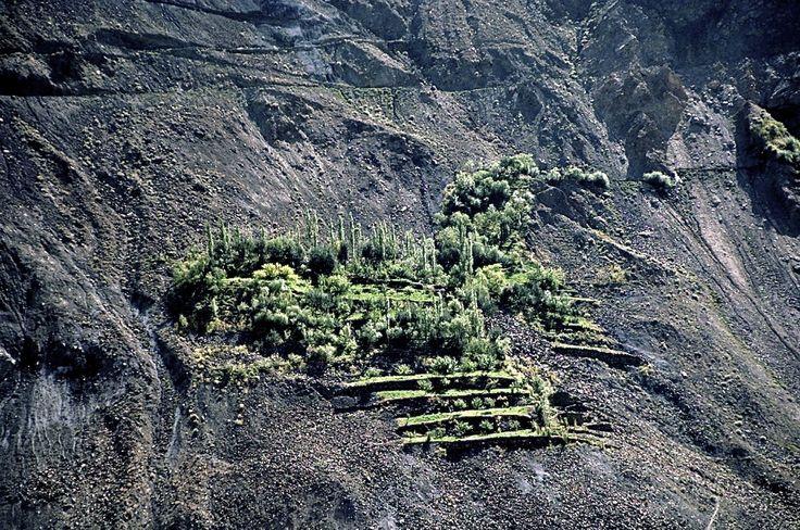Cultures dans la Vallée de Hunza /  pakistan - jcp 1992
