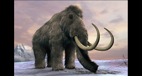 Essay/Term paper: Extinct animals research: woolly mammoth