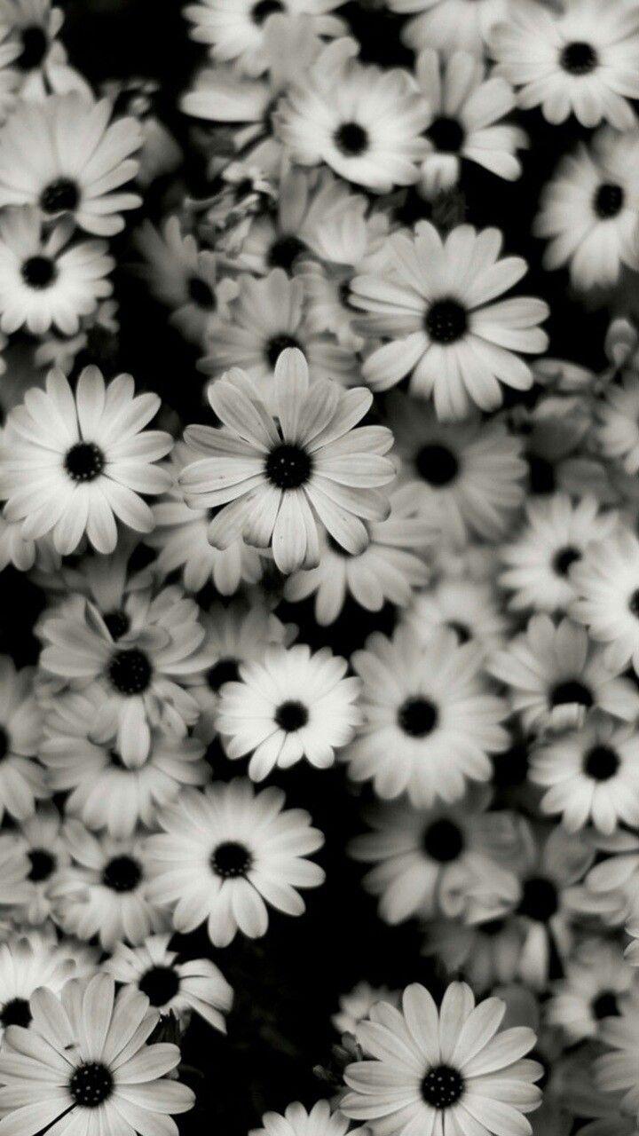 Black-white flowers (wallpaper)
