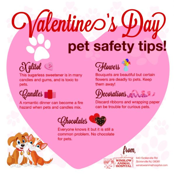 Valentines Day Pet Safety Tips