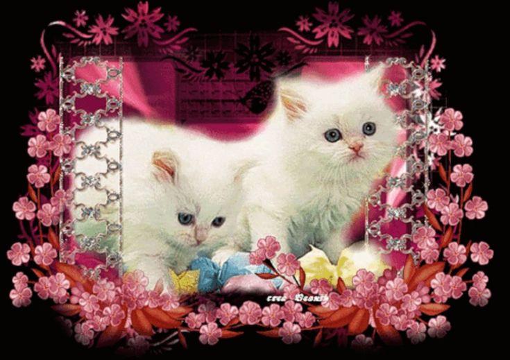 Мерцающие открытки кошки