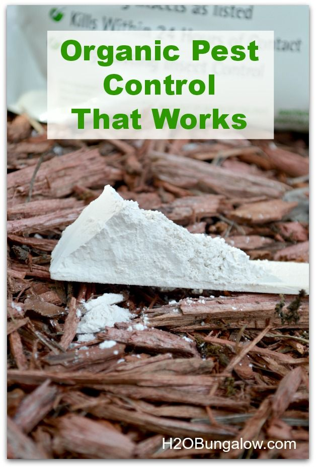 Diatomaceous Earth For Organic Pest Control www.h2obungalow.com