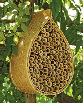 Mason Bees. Boost your garden's productivity by providing a happy home for peaceful, non-stinging Mason bees. Slightly smaller than honeybees, mason bees are incredible pollinators. Each one visits as many as 1000 blooms per day — 20 times as many as a honeybee! Hang this natural bamboo house against a tree or wall where it will get morning sun and attract bees. Female bees fill the bamboo tubes with their eggs, and nectar and pollen for the young to eat.: Bees Hives, Beehous, Masons, Bees House, Mason Bees, Bee House, Gardens, Non Sting, Honey Bees