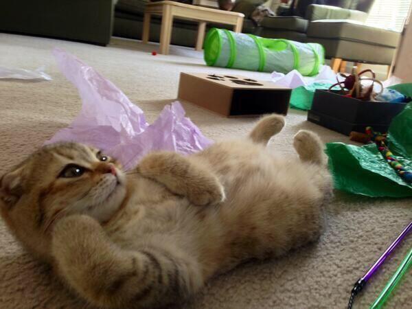 ぐうたらな猫 pic.twitter.com/lXwLrldDkB