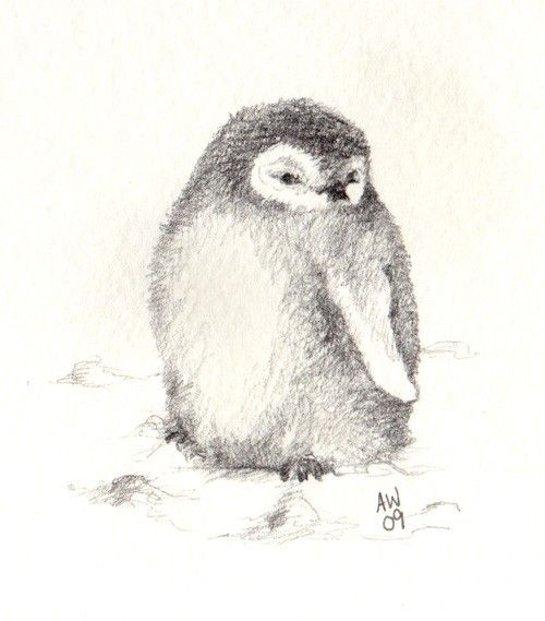 Penguins for Kids: Learn about these swimming birds.