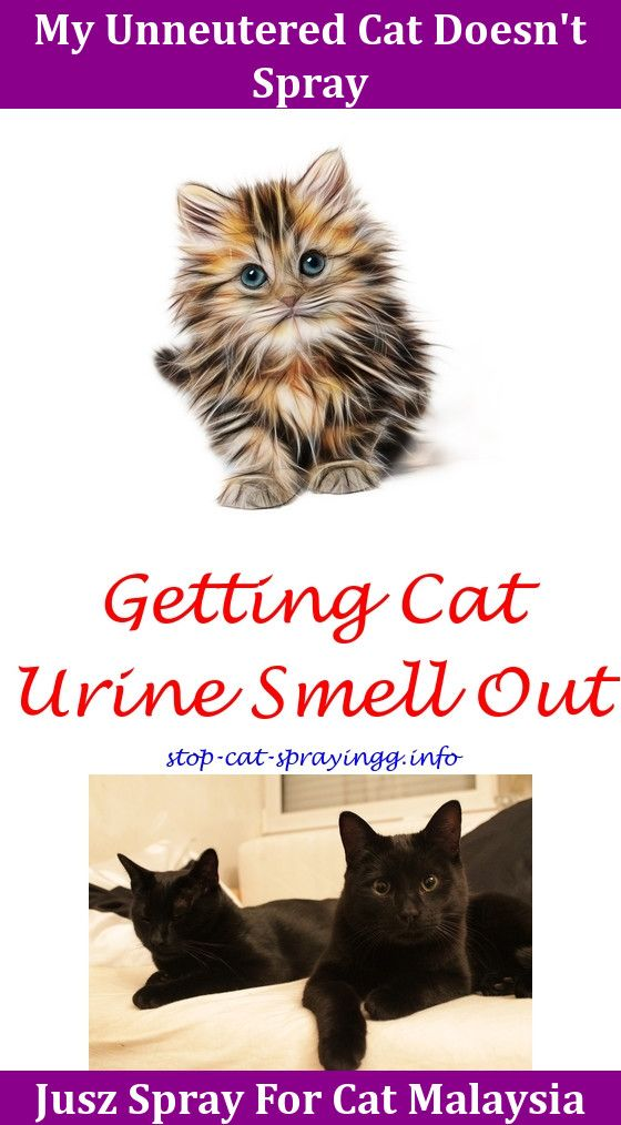 Do Female Cats Spray When Scared Cats Cat Pee Smell