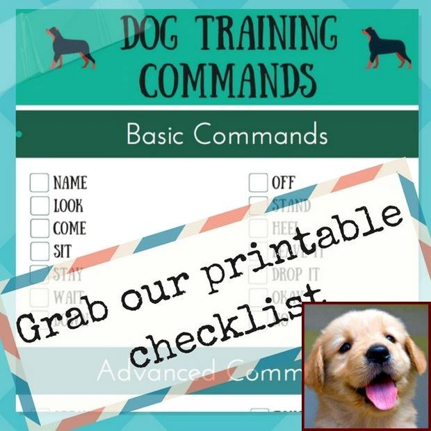 Pin On Housebreaking Dogs