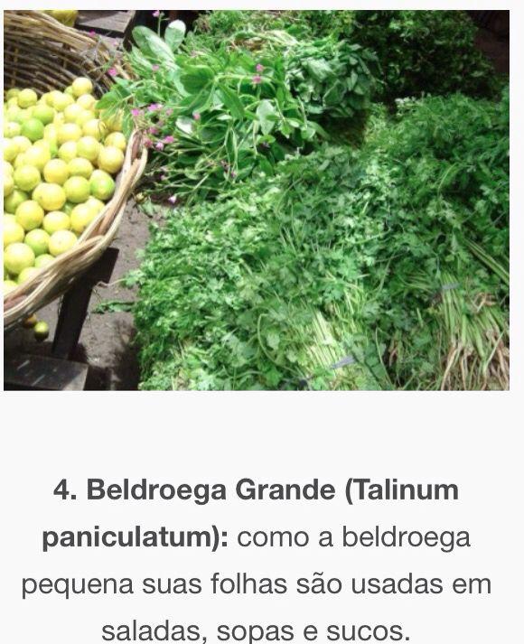 Beldroega