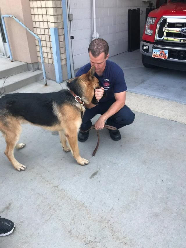Firefighter Adopts Stray Dog He Found And Rescued From California Wildfires Dogs Firefighter California Wildfires
